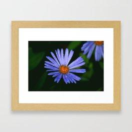 Blue Daisy Framed Art Print