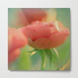 Romantic rose(5) Metal Print
