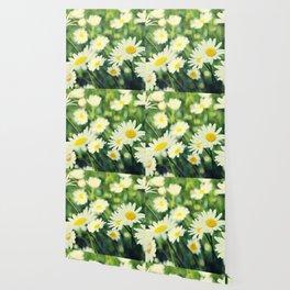 Chamomile flowers Wallpaper