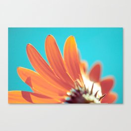 Rising Canvas Print