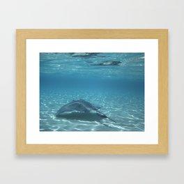 Stingray1 Framed Art Print