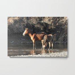 Wild Horses, Salt River, Mesa, Arizona Metal Print