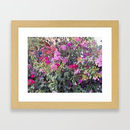 Bouganvilla Framed Art Print