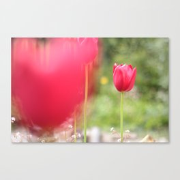 Bokeh Rose Canvas Print