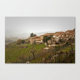 vineyard in veneto Canvas Print