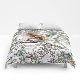 Seed Raider Comforters