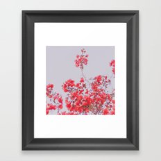 Sweet Pink  Framed Art Print