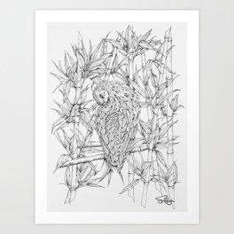 Nicobar pigeon in line Art Print