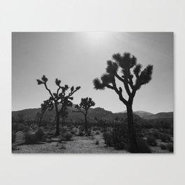 Joshua Trees Canvas Print