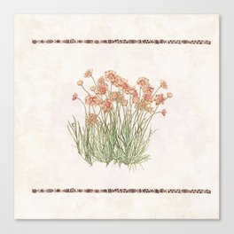 Flowering Scabiosa Canvas Print