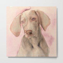 Pointer dog Metal Print