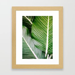 Big Leaves - Tropical Nature Photography Framed Art Print