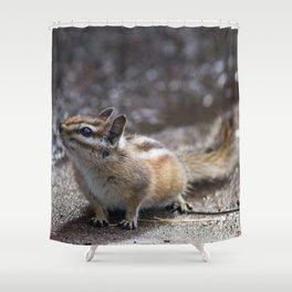 The Chipper Chipmunk Shower Curtain