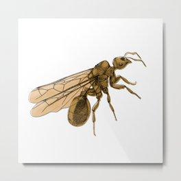 Flying Ant Metal Print