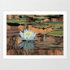 Walled Water Lily Art Print
