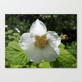Thimble berry flower Canvas Print