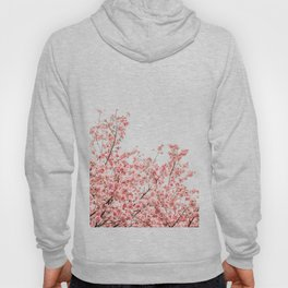 Cherry Blossoms (Color) Hoody
