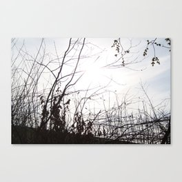 Woods II Canvas Print