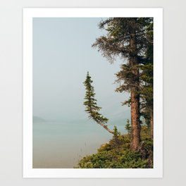 Lone Pine at Bow Lake Art Print