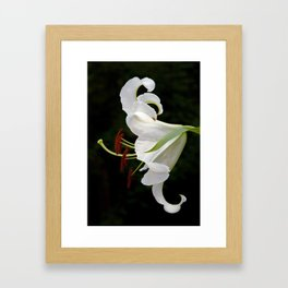 Casa Blanca Lily Framed Art Print