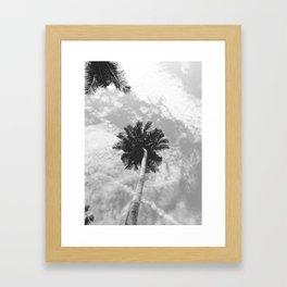 Palm Tree, San Blas Islands, Panama, Black & White Framed Art Print