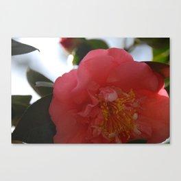 Camilla Blossom Canvas Print