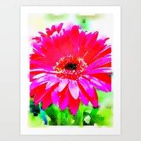 Hot Pink Gerbera Daisy Art Print