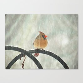 Female Cardinal in Snow Canvas Print