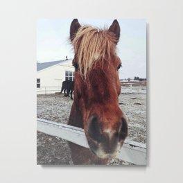 Brown horse face Metal Print