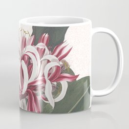 Queen Emma Spider Lily botanical watercolour Coffee Mug