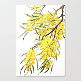 Godlen wattle flower watercolor Canvas Print