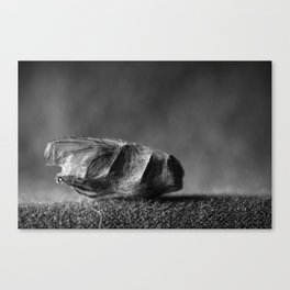wrapped up fly Canvas Print