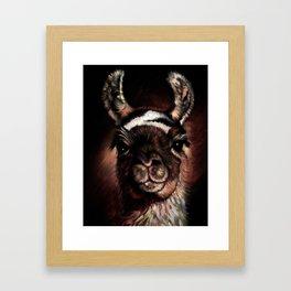 llama Cusco Peru Framed Art Print