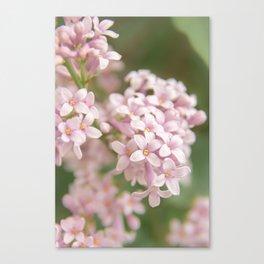 Pink Viburnum - Nature Photography Canvas Print