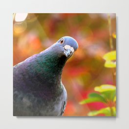 Cute Curious Pigeon Metal Print