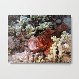 Red Scorpian Fish With Mouth Open Metal Print