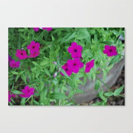Andy's Flowers Canvas Print