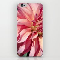 dahlia iPhone & iPod Skins featuring Dahlia  by A Wandering Soul