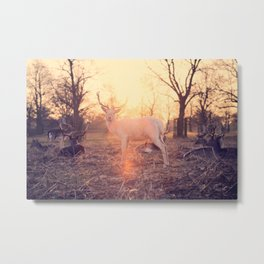 ALBINO DEER AT SUNSET WITH HERD Metal Print
