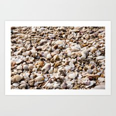 shells for days  Art Print