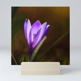 Bright Purple Spring Crocus Mini Art Print