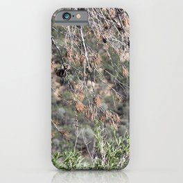 Nature - Trees iPhone Case