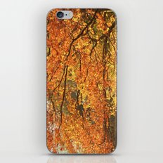 Autumn II iPhone & iPod Skin