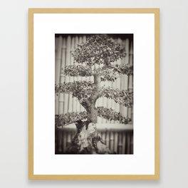 Bonsai Framed Art Print