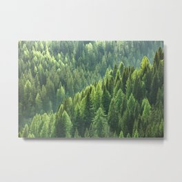 Pine tree forest in the morning fog Metal Print