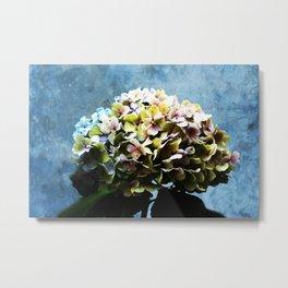 Shabby-chic Hydrangea Flower Metal Print