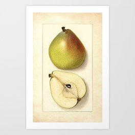 Vintage Botanical Anjou Pear Art Print