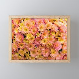 Pink Yellow and Orange Chrysanthemums Framed Mini Art Print