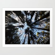 Looking up the Sky Art Print