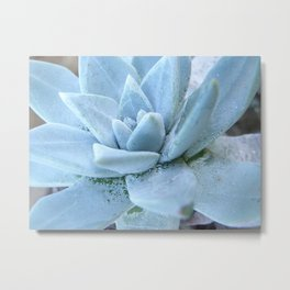 Succulents of the Channel Islands // Scorpion Metal Print